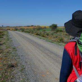 Cs arranca 300.000 euros en los PGE para potenciar las 3 culturas en el Camino de Santiago y la Catedral